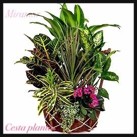 Cesta plantas CE.1