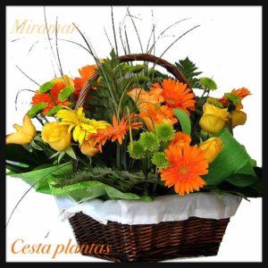 Cesta flor variada Ce. 4